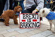 Two dogs with their owner and a Brexit is Barking placard join pet owners to take part in an anti Brexit Wooferendum rally on October 07, 2018 in London, England to protest against Britain leaving the European Union.