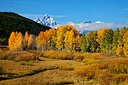 """Fall Colors at Oxbow Bend in Grand Teton National Park.<br /> <br /> For production prints or stock photos click the Purchase Print/License Photo Button in upper Right; for Fine Art """"Custom Prints"""" contact Daryl - 208-709-3250 or dh@greater-yellowstone.com"""