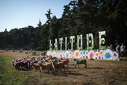 © Licensed to London News Pictures . 18/07/2013 . Suffolk , UK . A flock of painted sheep gather under a bright Latitide sign at The Latitude music and culture festival in Henham Park , Southwold . Photo credit : Joel Goodman/LNP