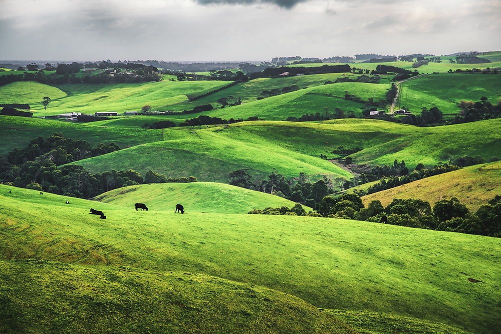 Rolling hills of Victoria Gippsland