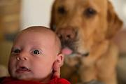 Baby Licked by a dog in Berkley, California