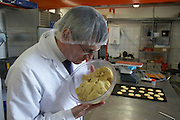 Checking the consistency of experimental biscuit dough in the kitchens of the Delacre biscuit production factory in Lambermont