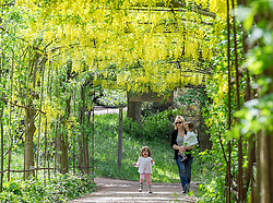 parental permission given but no names © Licensed to London News Pictures. 11/05/2015. Richmond, UK People enjoy the hot weather in the shade of the laburnum in the ornamental gardens at Richmond Park, West London, today 11th May 2015. Photo credit : Stephen Simpson/LNP