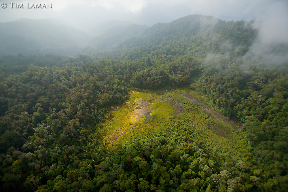 """Aerial view of the Foja Mountains rain forest.<br />Natural clearing is the """"bog"""" area used as a landing site for the expedition."""