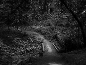 Forest of Nisene Marks State Park