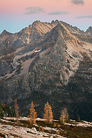 Subalpine Larches (Larix lyallii) in golden autumn color at Cutthroat Pass. North Cascades Washington