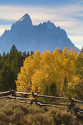 Fall colors and a fence in the Grand Teton National Park, Wyoming.