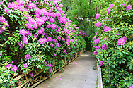 Rhododendron Path, , Further Lane, East Hampton, NY 189 Further Lane, East Hampton, NY