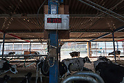 Minero Farm near Koriyama, Fukushima, Japan Sunday November 22nd 2015 The Minero Farm is run by the NPO, Fukushima Agricultural Revitalizing Network (FAR-Net) and was intially sponsored by Danone. It aims to revitalise dairy farming in Fukushima through educational and training programmes.