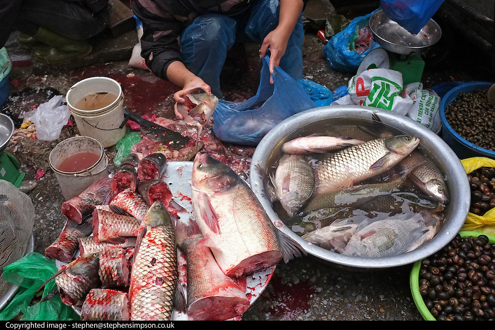 © Licensed to London News Pictures. 30/12/2011. A woman chops up live fish in a street market in Hanoi,  Vietnam. Photo credit : Stephen Simpson/LNP