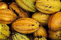 France - Département d'Outre mer de la Guadeloupe (DOM) - Basse Terre/ Pointe noir - La maison du Cacao - Cabosse, fruit du Cacaoyer