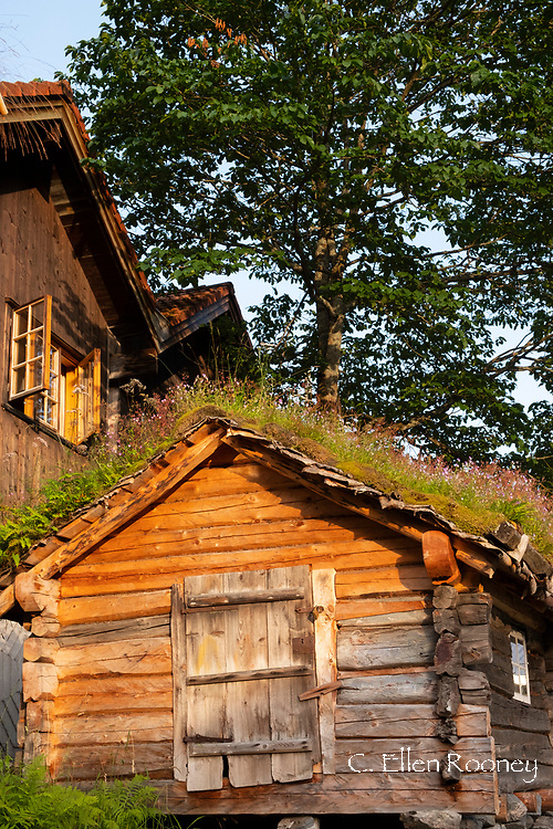Rustic log cabins in Geiranger on Geirganger Fjord, Vestlandet, Norway