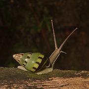 Borneo - Gunung Mulu NP - Invertebrates