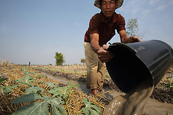 Unnamed man in Ekxang Village, Phonhong District, Vientiane Province, uses water pumped from a water hole to irrigate Pumpkin plants.