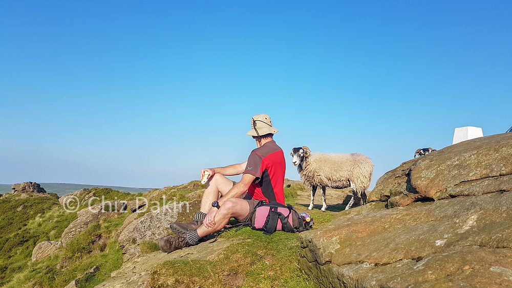 Beware the marauding sheep on the summit rocks of Win Hill!