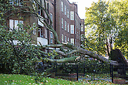 A large tree with it's roots ripped out of the ground, blown down onto a 4th floor property on Stamford Hill estate.  The sever storm called St Jude is the worst to hit the Uk for years, it has caused sever damage to parts of the country with winds of up to 90mph.