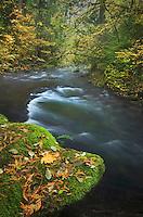 Whatcom Creek in autumn, Whatcom Falls Park Bellingham, Washington