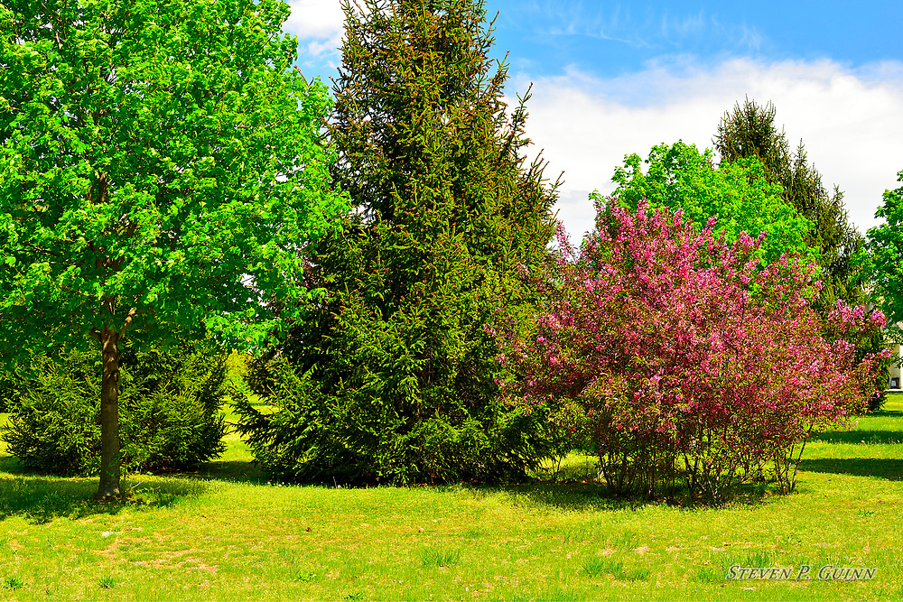 """I captured this landscape image in Demotte, Indiana on April 25th, 2017. I came across these various trees and shrubs along road while driving through this rural area of town. At first, the vibrant pink color of the shrub is what got my attention, but as I looked over the entire scene, I really liked the way the vibrant pink and green colors blended with the blue sky in the background and decided to expand the angle of view for the overall shot. I also wanted to capture the shadows within the trees as well as the shadows cast by them because they add great contrast to the bright colors throughout the entire image and add depth. <br /> <br /> Printed on Hahnemühle German Etching paper. Limited to 120 productions per size.<br /> <br /> Framed prints are available in 18"""" x 12"""", 24"""" x 16"""", 30"""" x 20"""", 36"""" x 24"""", and 45"""" x 30"""" sizes."""