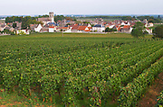 Vineyard. Rugiens sector. P village and church. Pommard, Cote de Beaune, d'Or, Burgundy, France