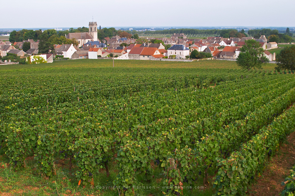 Vineyard. Rugiens sector. P village and church. Pommard, Cote de Beaune, d'Or, Burgundy, France