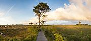 Boardwalk across wetland at Thursley Common NNR. Surrey, UK.