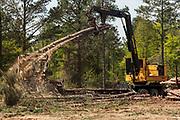 Timber Harvesting