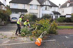 © Licensed to London News Pictures. 28/10/2013<br /> Tree surgeon's remove tree.<br /> Storm Damage today (28.10.2013)<br /> A Tree across Pettswood Road,Pettswood,Greater London<br /> due to storm St Jude.<br /> Photo credit :Grant Falvey/LNP