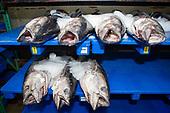 Honolulu Fish Company