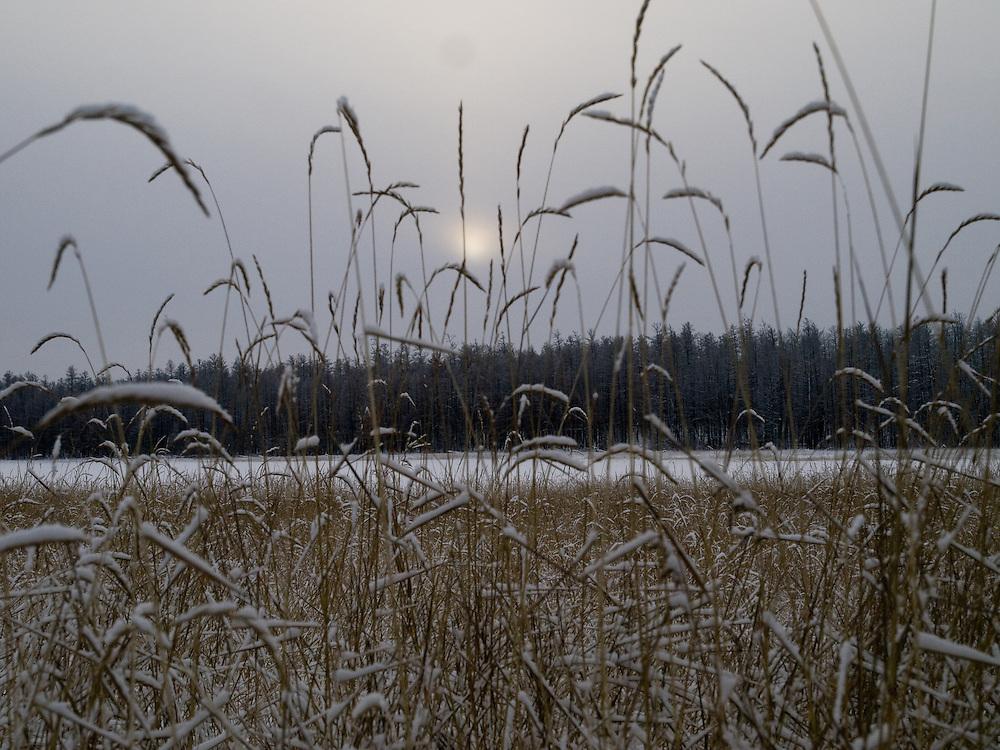 Frueher Morgen in der sibirischen Taiga - ungefaehr 150 Kilometer entfernt von der sibirischen Stadt Jakutsk. Jakutsk hat 236.000 Einwohner (2005) und ist Hauptstadt der Teilrepublik Sacha (auch Jakutien genannt) im Foederationskreis Russisch-Fernost und liegt am Fluss Lena. Jakutsk ist im Winter eine der kaeltesten Grossstaedte weltweit mit bis zu durchschnittlichen Wintertemperaturen von -40.9 Grad Celsius.<br /> <br /> Early morning in the Siberian Taiga about 150 km from the city of Yakutsk. Yakutsk is a city in the Russian Far East, located about 4 degrees (450 km) below the Arctic Circle. It is the capital of the Sakha (Yakutia) Republic (formerly the Yakut Autonomous Soviet Socialist Republic), Russia and a major port on the Lena River. Yakutsk is one of the coldest cities on earth, with winter temperatures averaging -40.9 degrees Celsius.