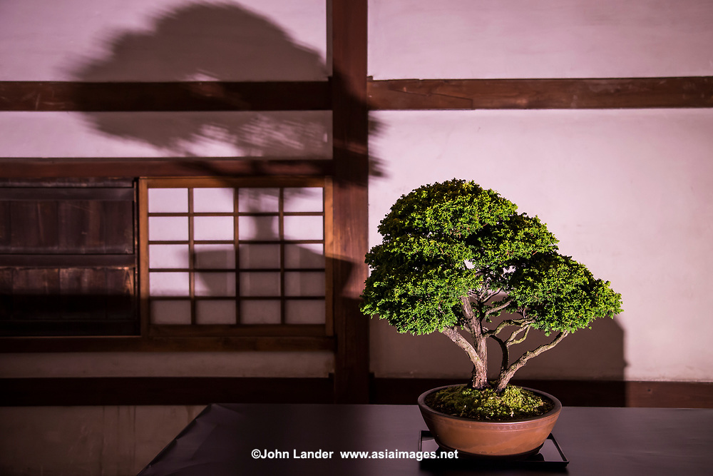 """Himeji Castle Saijiki Art Exhibition Bonsai - Bonsai is a Japanese art form using miniature trees grown in containers. This art form comes from Chinese tradition of penjing from which it originated.  The Japanese tradition dates back over a thousand years, and has its own set of aesthetics.  The purpose of bonsai are pleasant contemplation for the viewer, and the satisfaction of effort and ingenuity for the gardener.  Some species of tree are popular as bonsai material because they have small leaves that make them suitable for the compact scope -  relatively small and to meet the aesthetic standards of bonsai. The tree's growth is restricted by the pot environment and continually shaped to limit its growth, and encourage vigor to areas requiring further development.  Unlike """"dwarfing"""" Bonsai makes use of root reduction, pruning, and defoliation to produce small trees that mimic the shape and style of mature, full-size trees."""