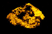 This mineral produces a strong yellow color when exposed to long wave ultraviolet (UV) light. Wernerite is a variation of scapolite.  Collected in Grenville Québec, Canada.  Wernerite is considered one of the strongest fluorescent minerals in the long wave.  This mineral was named in the early 1800's by Abraham Gottlob Werner (1749-1817) who was a well known professor of mineralogy in German mineralogy professor.