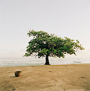 A tree on the beach at Petit-Goâve, Haiti