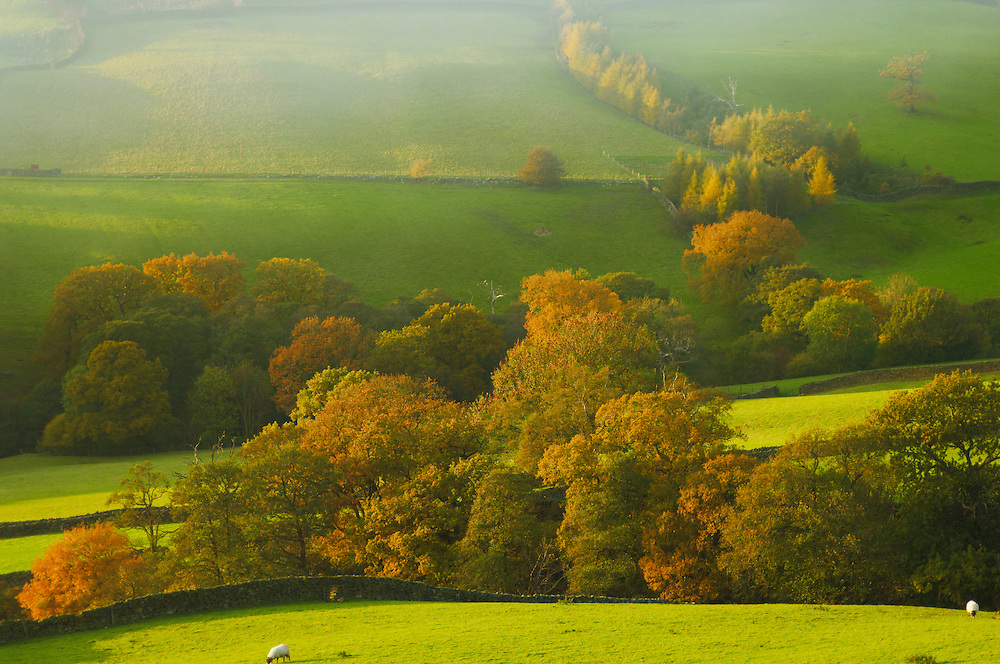 Farndale farm with autumn colours at sunset, North Yorkshire Moors National Park, England. .<br /> <br /> Visit our MEDIEVAL PHOTO COLLECTIONS for more   photos  to download or buy as prints https://funkystock.photoshelter.com/gallery-collection/Medieval-Middle-Ages-Historic-Places-Arcaeological-Sites-Pictures-Images-of/C0000B5ZA54_WD0s