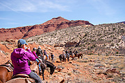 Tourists enjoy a trail ride with staff from Red Cliffs Lodge, near Moab, Utah, USA.