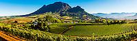 Panoramic view of vineyards, Delaire Graff Wine Estate atop Helshoogte Pass, near Stellenbosch, Cape Winelands (near Cape Town), South Africa.