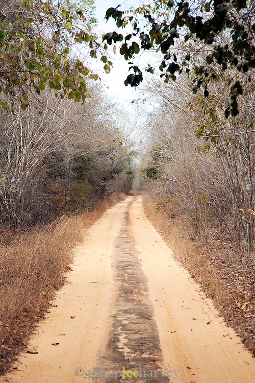 A dusty track road leaving out of the Kirindy Mitea National Park, Madagascar