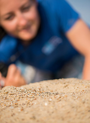 Project Officer Emma Witcutt checking on nests, Little tern Sternula albifrons monitoring site, part of an EU Life Project to protect this species, Winterton-on-Sea, Norfolk, July