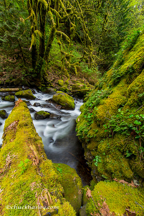 Mossy rocks and trees line McCord Creek in the Columbia Gorge National Scenic Area, Oregon, USA