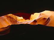 Tumbleweed caught between the walls of Upper Antelope Canyon, Navajo Reservation, Arizona.