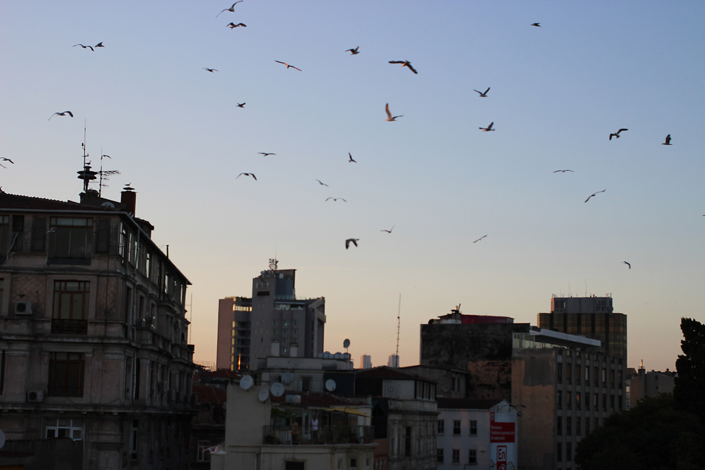 Seagulls fly about buildings along the Istiklal in Beyoglu, Istanbul.