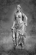 2nd - 1st century BC Roman marble sculpture of Aphrodite (Venus), 'Marine Venus' Type with a dolphin, copied from a Hellenistic Greek original,  inv 6296, Museum of Archaeology, Italy, white background. Black and White Wall art print by Photographer Paul E Williams