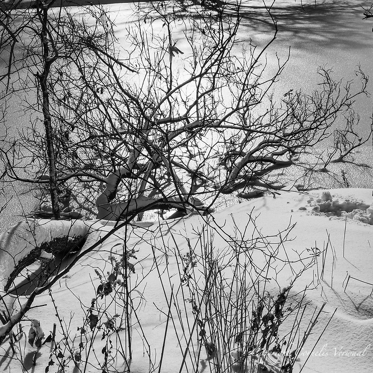 Winter landscape at The Point in Central Park