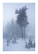 Winter wonderland enveloped in thick mist on Mount Seymour on New Year'e Eve, Vancouver, British Columbia