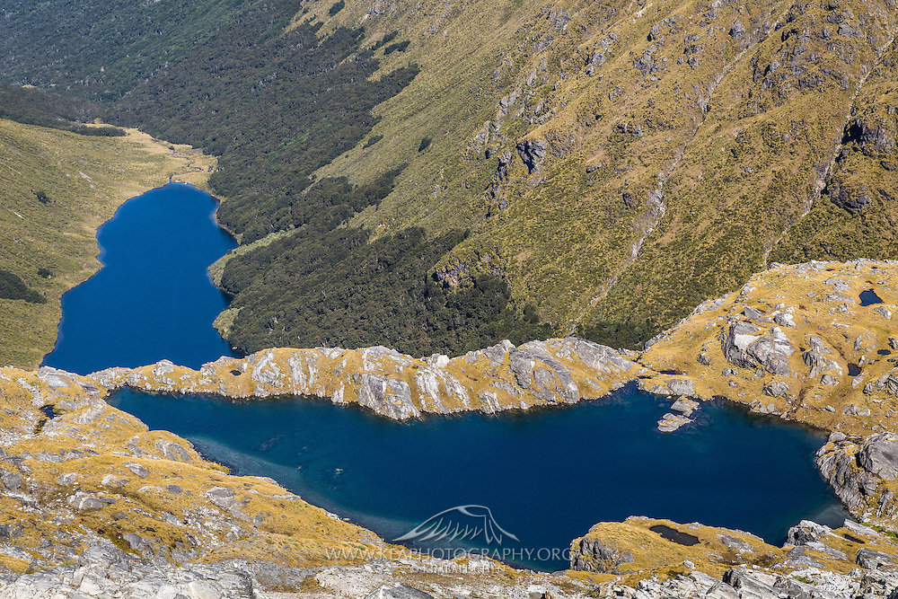 Above the tree line, alpine tussock thrives.  Blue lakes and alpine tarns viewed from the top of Mt Burns, Fiordland.