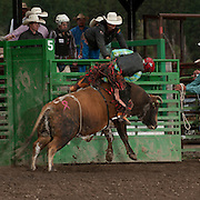 Josh Toomer gets brushed off of Darby Rodeo Associations Darbacious in the long round at the 2016 Darby MT EPB  Josh Homer photo.  Photo credit must be given on all uses.