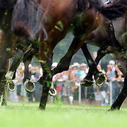 Horses hooves kick up the turf during a day at the Races at the Cromwell Race meeting, Cromwell, Central Otago, New Zealand. 27th November 2011. Photo Tim Clayton