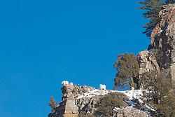 Mountain Goats, Palisades Creek, Swan Valley Idaho