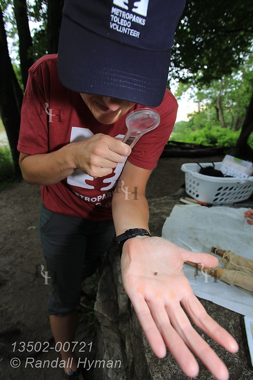 Metroparks Toledo volunteer Michelle Ranville identifies tiny aquatic snail to assess water quality of Maumee River at Side Cut Metropark, Maumee, Ohio.