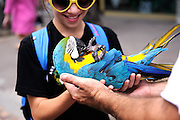 Child (11 years old) holding Blue-and-Yellow Macaw (Ara ararauna), also known as the Blue-and-gold Macaw, on its back. Waikiki, Hawaii RIGHTS MANAGED LICENSE AVAILABLE FROM www.PhotoLibrary.com