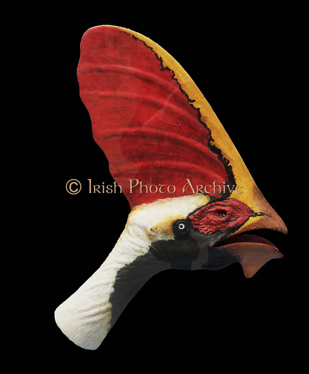 Restoration of the head of the Lower Cretaceous pterosaur 'Tapejara'. Adults have a wingspan of several metres.